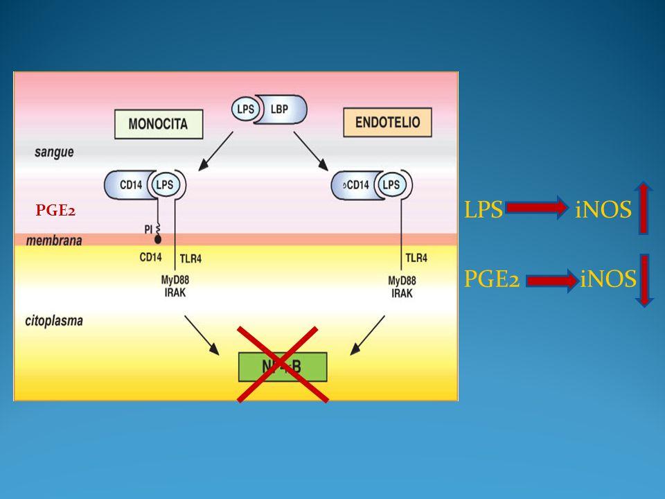 LPS iNOS PGE2 iNOS PGE2