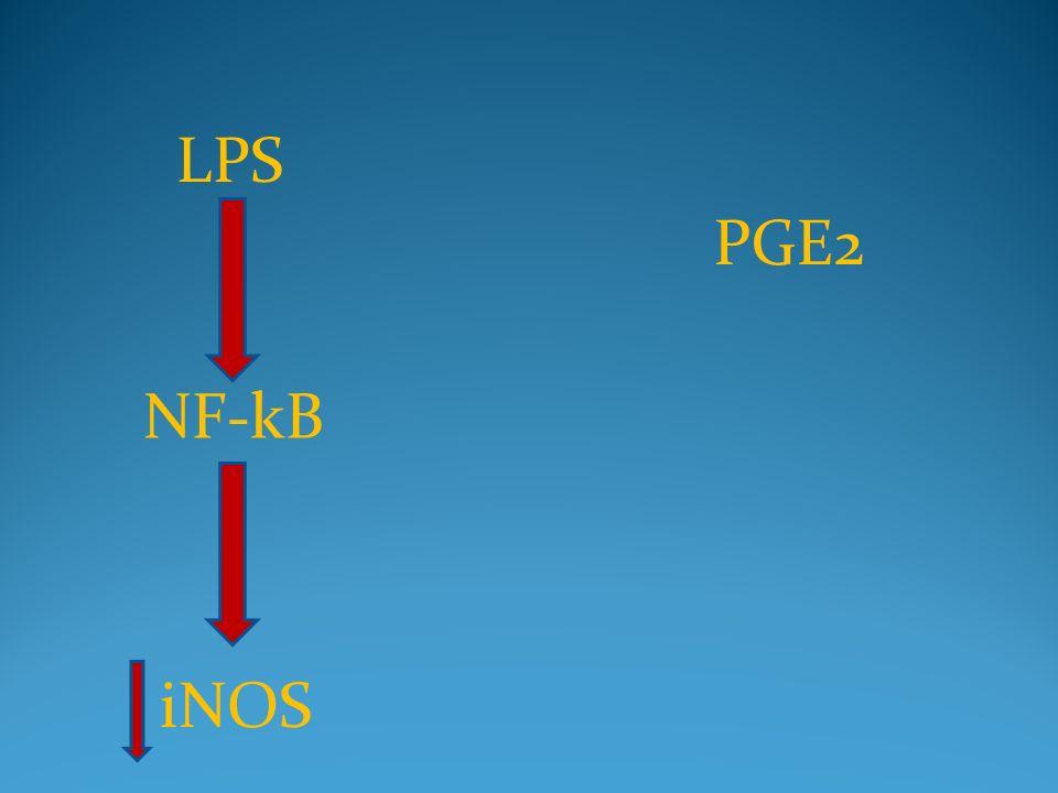 LPS NF-kB iNOS PGE2