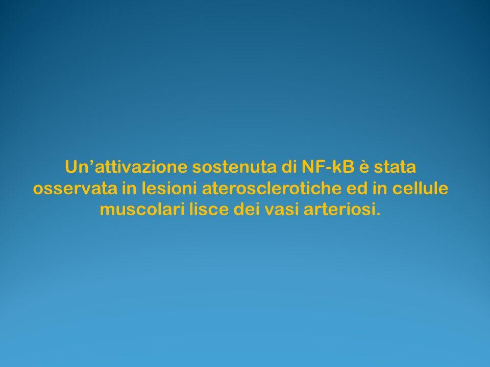 Unattivazione sostenuta di NF-kB è stata osservata in lesioni aterosclerotiche ed in cellule muscolari lisce dei vasi arteriosi.