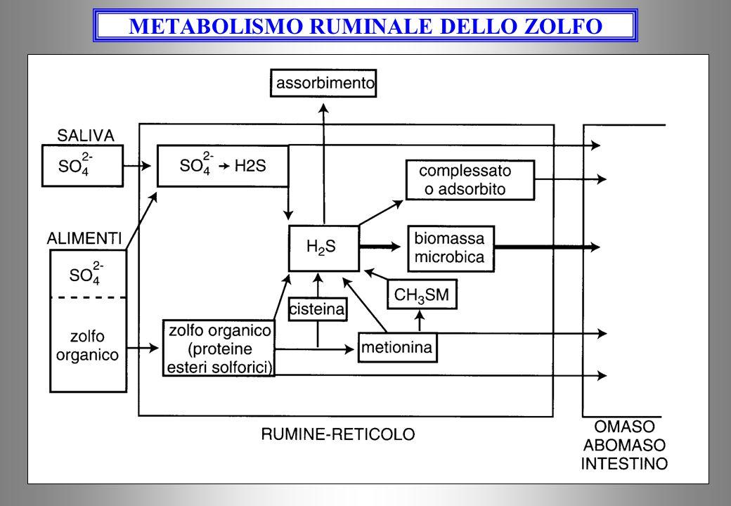 CONCENTRAZIONE RUMINALE DEI COMPOSTI AZOTATI Aa liberi peptidi a basso PM NH 3 ProteineNucleotidi 0,1 - 0,5 mg/dl 0,2 - 1,0 mg/dl 0 - 130 mg/dl 100 -