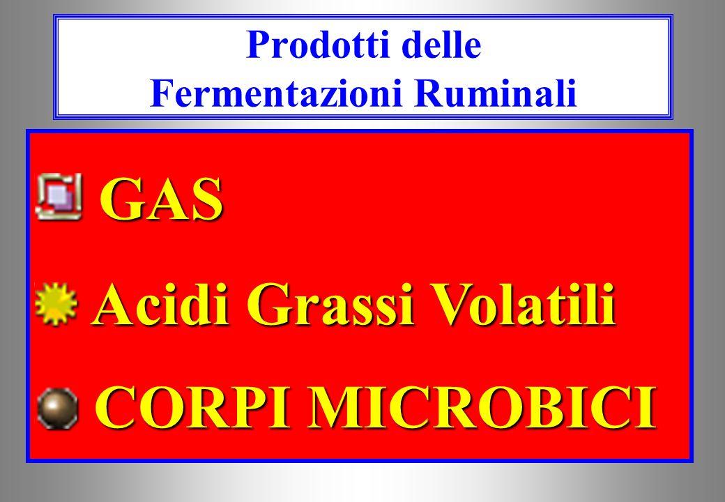 DEGRADAZIONE E BIOSINTESI RUMINALE Sostanza organica 60-70% Proteine alimentari 50-80% Proteine sintetizzate Stime CNCPS
