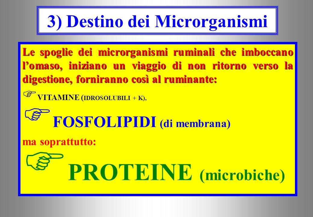 ISOACIDI 2bis) ISOACIDI ACIDI GRASSI A CATENA RAMIFICATA ISOBUTIRRICO,ISOVALERICOECC… Possono essere interessanti quali precursori dei tre aminoacidi