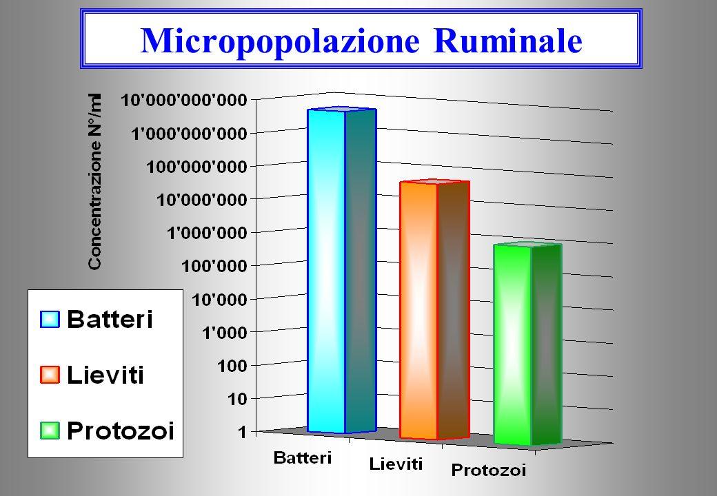 Nel rumine si trovano microrganismi: 1.BATTERI (10 9 -10 10 /ml), 2.MICETI (LIEVITI) (10 7 /- 10 8 /ml), 3.PROTOZOI (10 6 /ml) che vivono in simbiosi