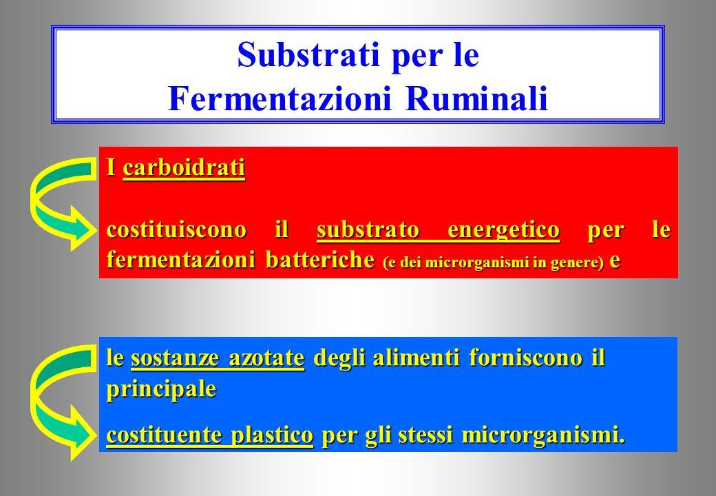 Micropopolazione Ruminale