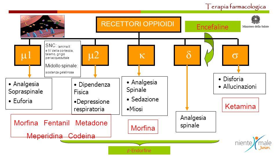 Encefaline RECETTORI OPPIOIDI Analgesia Sopraspinale Euforia Dipendenza Fisica Depressione respiratoria Analgesia spinale Analgesia Spinale Sedazione