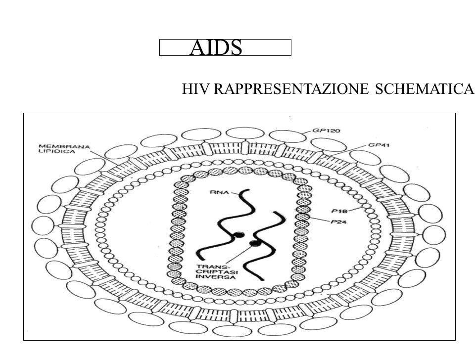 AIDS HIV RAPPRESENTAZIONE SCHEMATICA