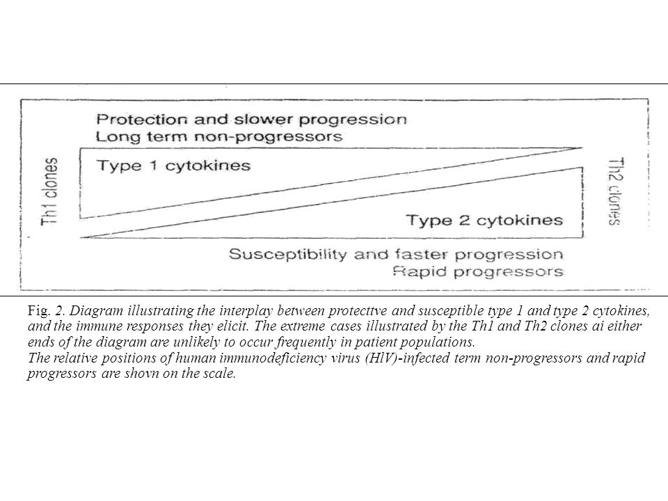 Fig. 2. Diagram illustrating the interplay between protecttve and susceptible type 1 and type 2 cytokines, and the immune responses they elicit. The e
