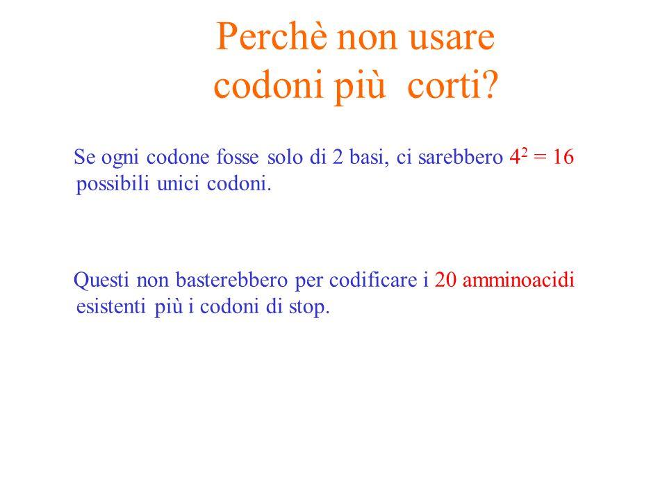 Perchè non usare codoni più corti? Se ogni codone fosse solo di 2 basi, ci sarebbero 4 2 = 16 possibili unici codoni. Questi non basterebbero per codi