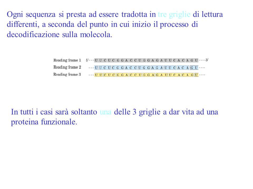 Ogni sequenza si presta ad essere tradotta in tre griglie di lettura differenti, a seconda del punto in cui inizio il processo di decodificazione sull
