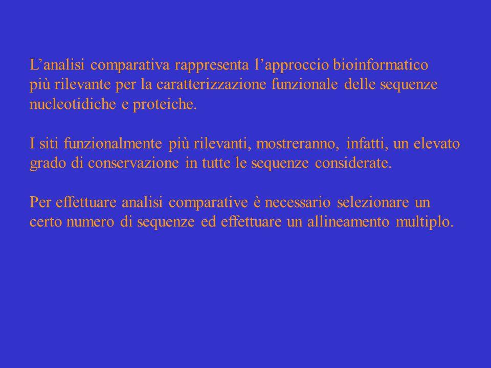 Lallineamento multiplo viene rappresentato sotto forma di una tabella costituita da righe, corrispondenti alle sequenze omologhe considerate, e da colonne, corrispondenti a ciascun sito dellallineamento.