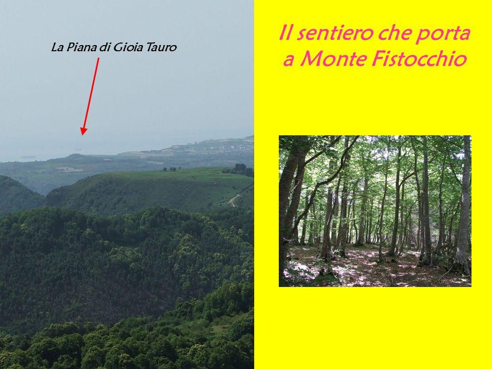 Il sentiero che porta a Monte Fistocchio La Piana di Gioia Tauro