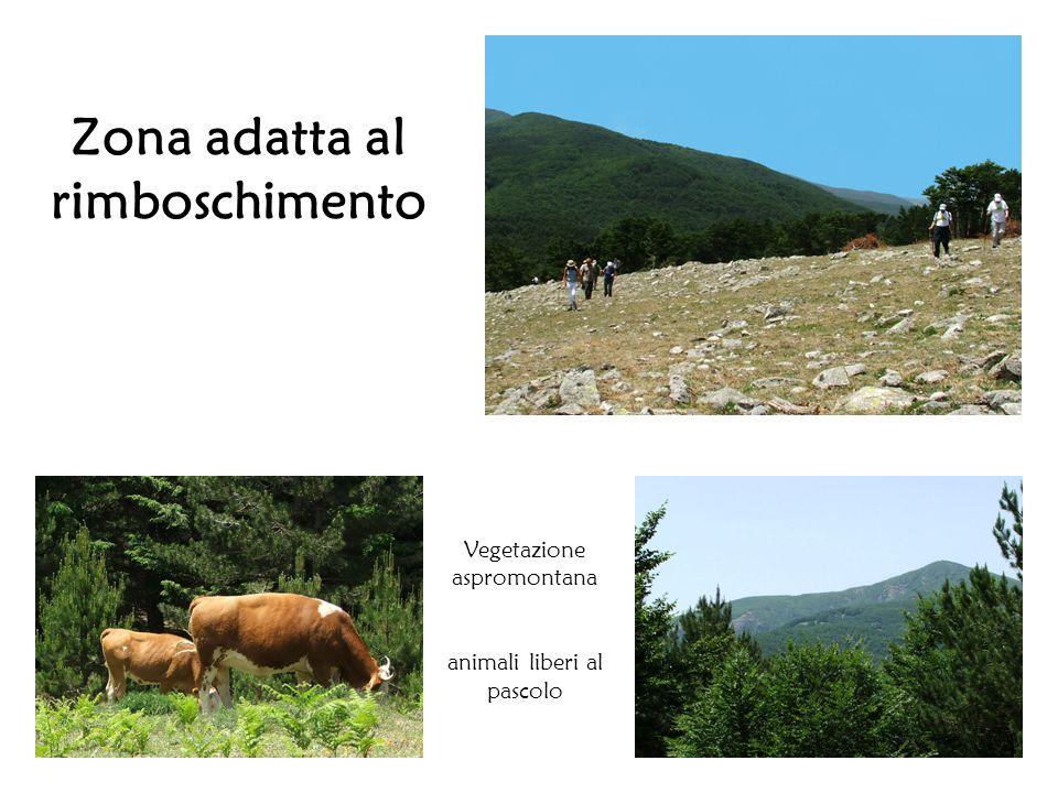 Zona adatta al rimboschimento Vegetazione aspromontana animali liberi al pascolo
