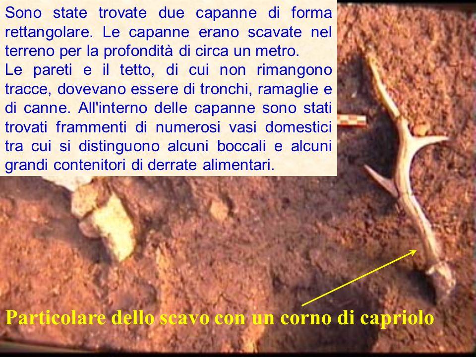 Particolare dello scavo con un corno di capriolo Sono state trovate due capanne di forma rettangolare.