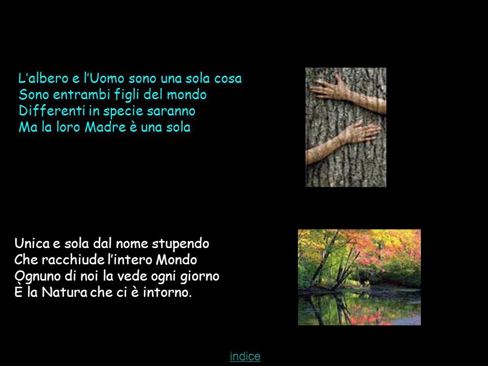 Lalbero e lUomo sono una sola cosa Sono entrambi figli del mondo Differenti in specie saranno Ma la loro Madre è una sola Unica e sola dal nome stupendo Che racchiude lintero Mondo Ognuno di noi la vede ogni giorno È la Natura che ci è intorno.
