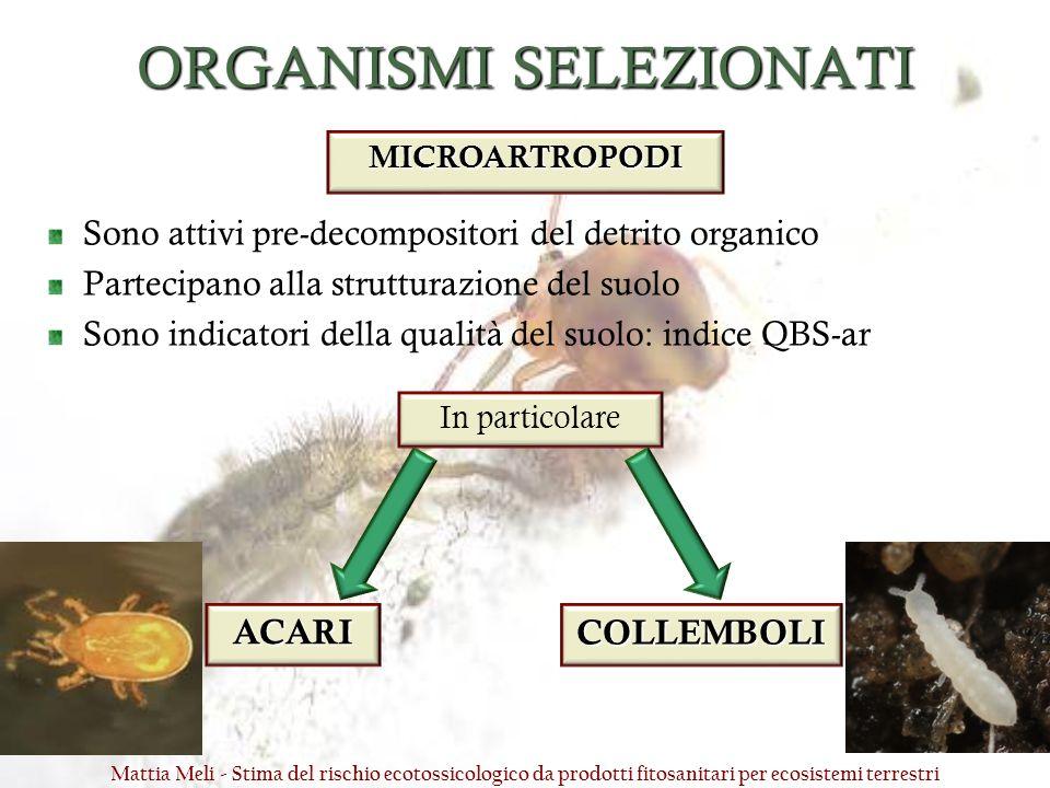 ORGANISMI SELEZIONATI Sono attivi pre-decompositori del detrito organico Partecipano alla strutturazione del suolo Sono indicatori della qualità del s
