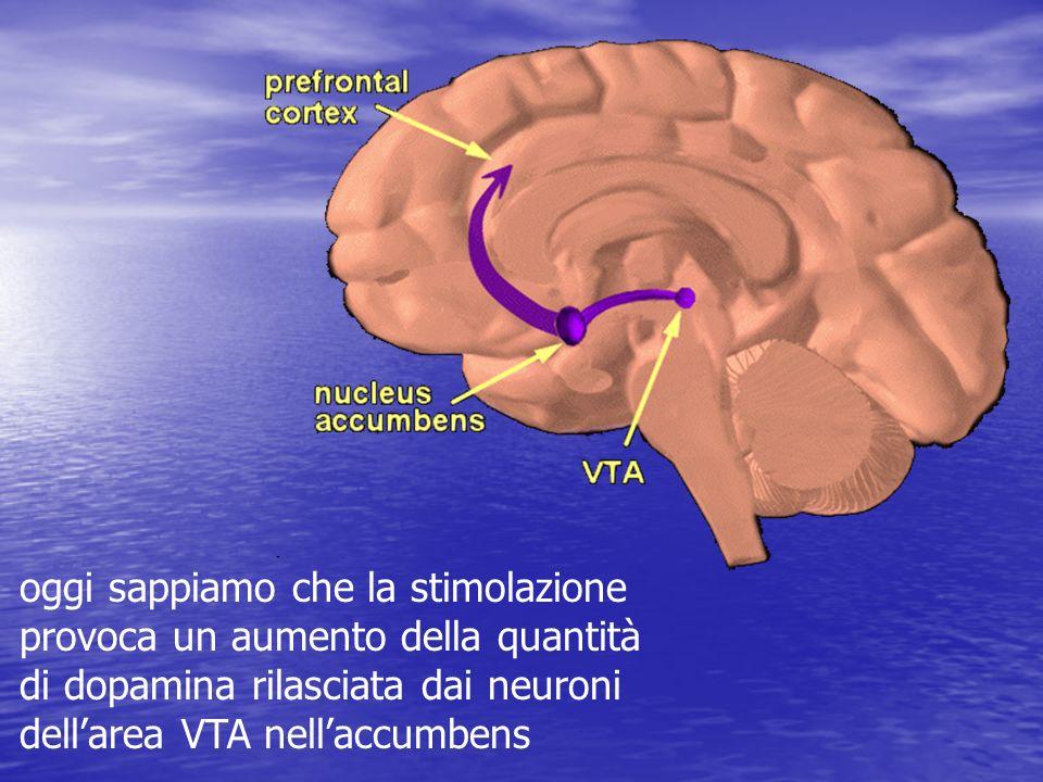 oggi sappiamo che la stimolazione provoca un aumento della quantità di dopamina rilasciata dai neuroni dellarea VTA nellaccumbens