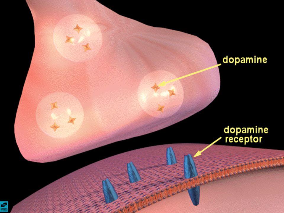 sinapsi dopaminergica