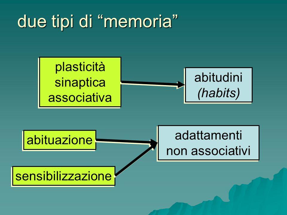 due tipi di memoria plasticità sinaptica associativa abitudini (habits) abitudini (habits) adattamenti non associativi adattamenti non associativi abi