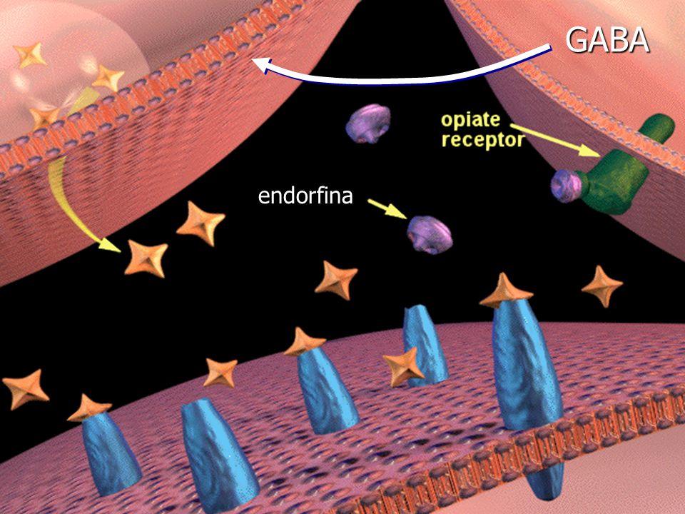 endorfina GABA