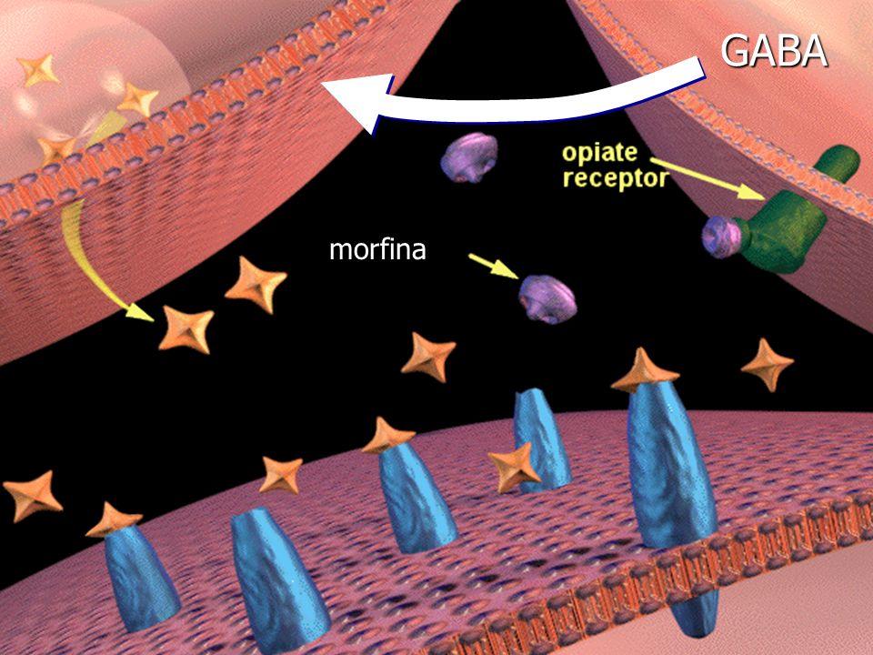 morfina GABA