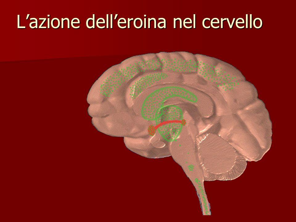 Lazione delleroina nel cervello