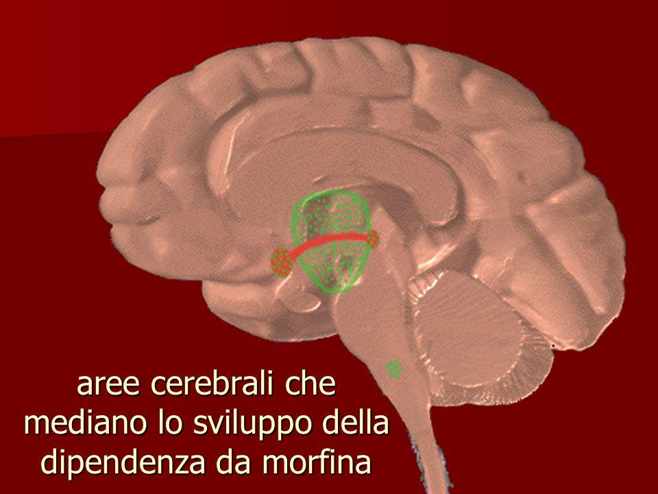 aree cerebrali che mediano lo sviluppo della dipendenza da morfina