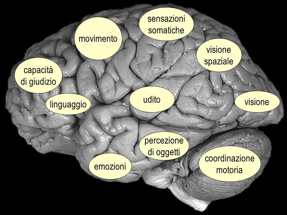 visione spaziale sensazioni somatiche movimento capacità di giudizio linguaggio udito percezione di oggetti coordinazione motoria emozioni