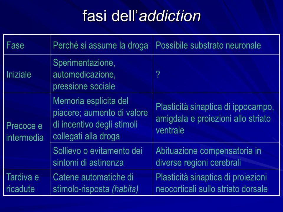 fasi delladdiction FasePerché si assume la drogaPossibile substrato neuronale Iniziale Sperimentazione, automedicazione, pressione sociale ? Precoce e