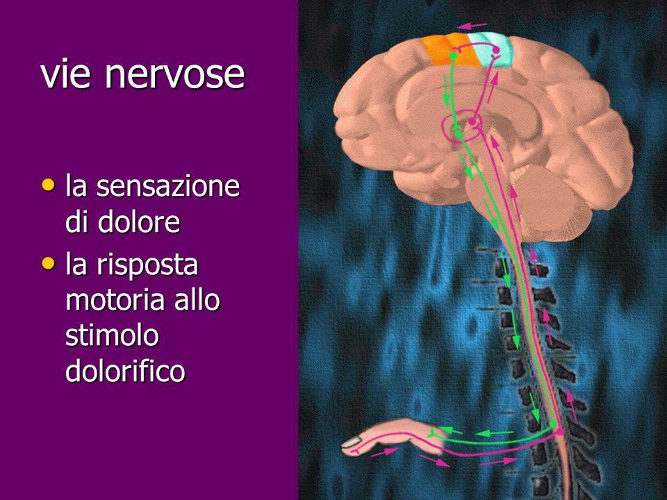 vie nervose la sensazione di dolore la sensazione di dolore la risposta motoria allo stimolo dolorifico la risposta motoria allo stimolo dolorifico