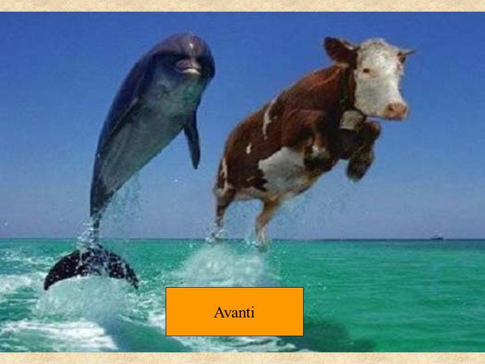 Se i due delfini ti sono apparsi perfettamente identici, puoi tornare tranquillamente al tuo lavoro