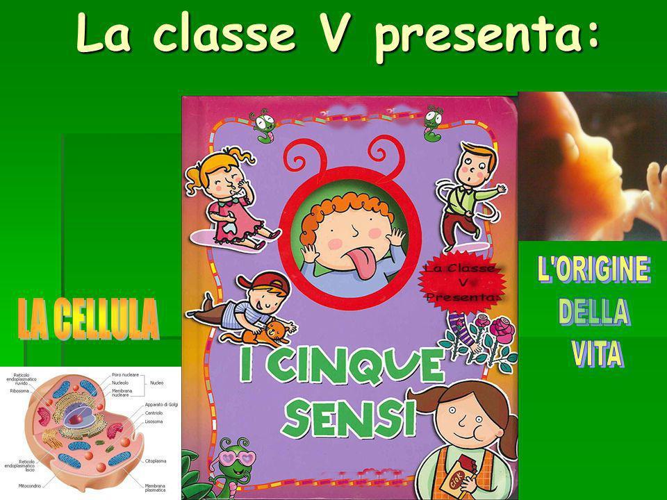 La classe V presenta:
