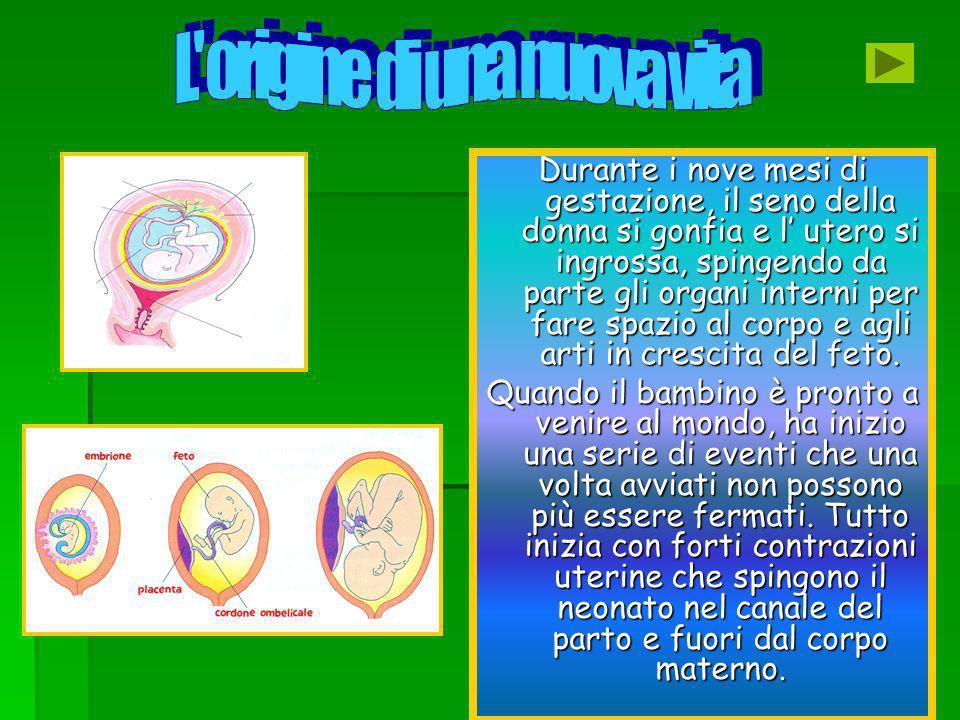 Durante i nove mesi di gestazione, il seno della donna si gonfia e l utero si ingrossa, spingendo da parte gli organi interni per fare spazio al corpo e agli arti in crescita del feto.