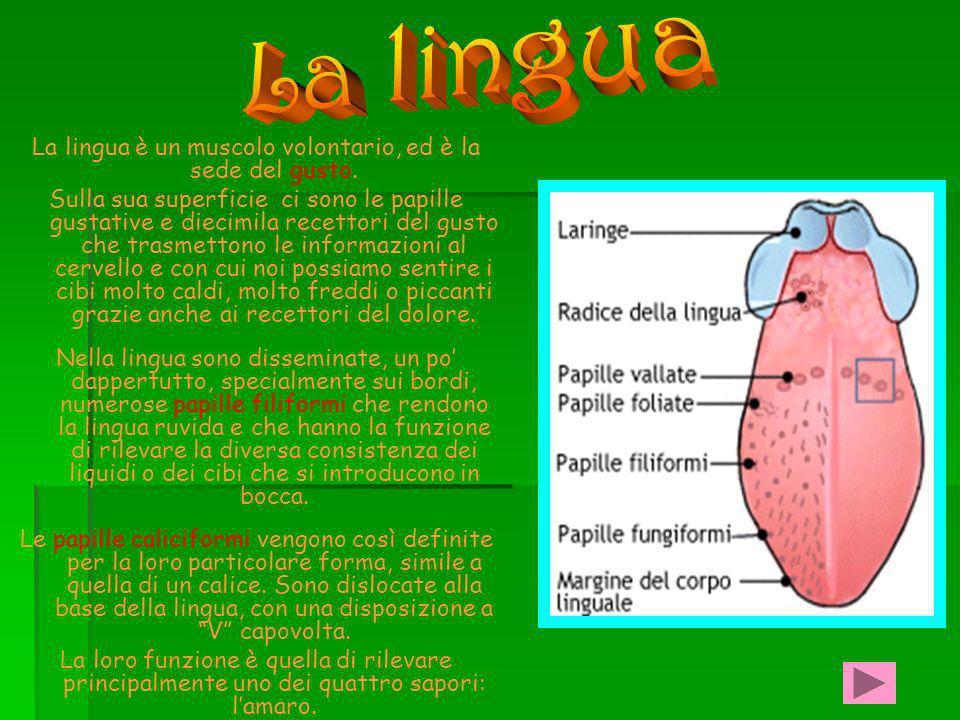 Tutti gli esseri viventi sono Costituiti da cellule La cellula è la più piccola unità vivente.