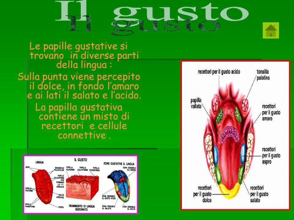 cellule pluricellulari Cellule epiteliali (cellule della pelle) Globuli rossi (cellule del sangue) Cellule muscolari Neuroni (cellule nervose) Cellule unicellulari Le cellule si dividono in due tipi