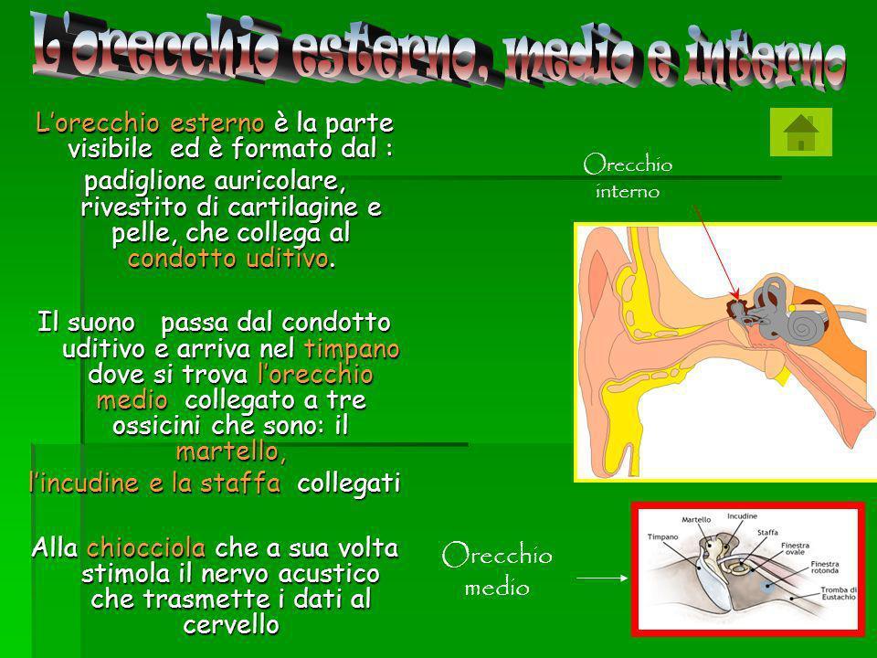Locchio è formato da: La cornea una membrana Trasparente che lo avvolge.
