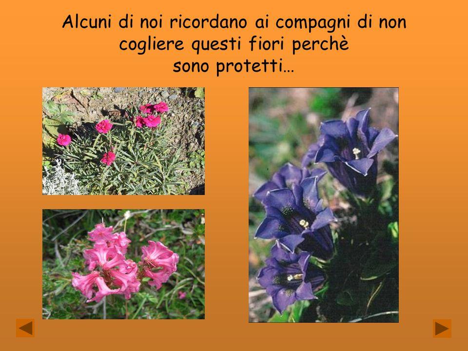 Alcuni di noi ricordano ai compagni di non cogliere questi fiori perchè sono protetti…