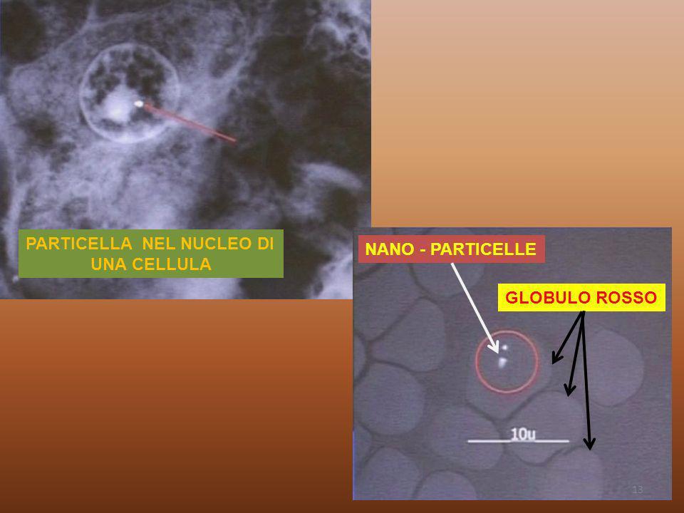 PARTICELLA NEL NUCLEO DI UNA CELLULA NANO - PARTICELLE GLOBULO ROSSO 13