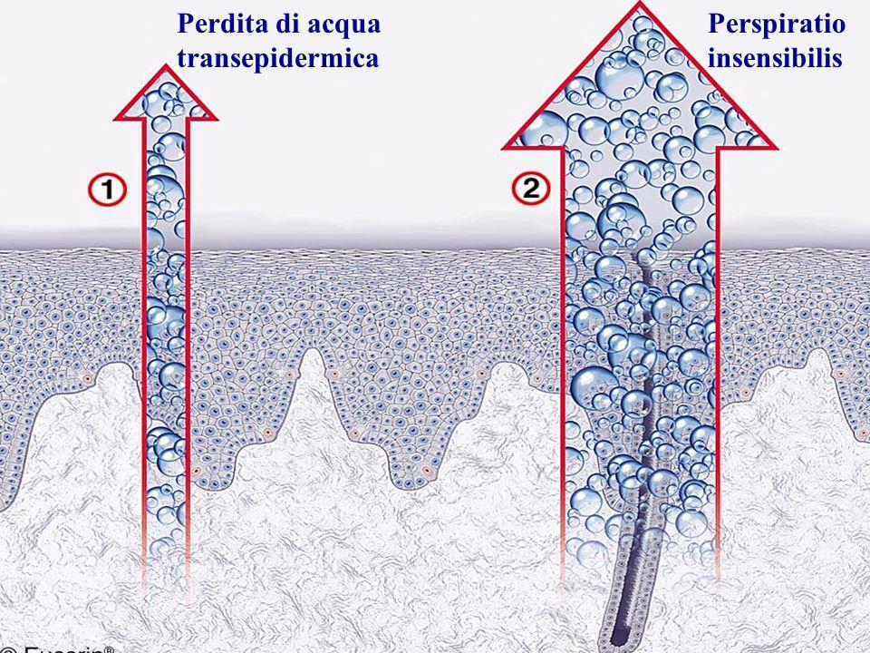 Perdita di acqua transepidermica Perspiratio insensibilis
