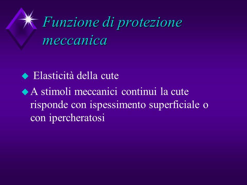 Funzione di protezione meccanica u Elasticità della cute u A stimoli meccanici continui la cute risponde con ispessimento superficiale o con iperchera