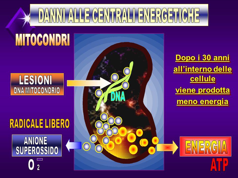 Dopo i 30 anni allinterno delle cellule viene prodotta meno energia Dopo i 30 anni allinterno delle cellule viene prodotta meno energia