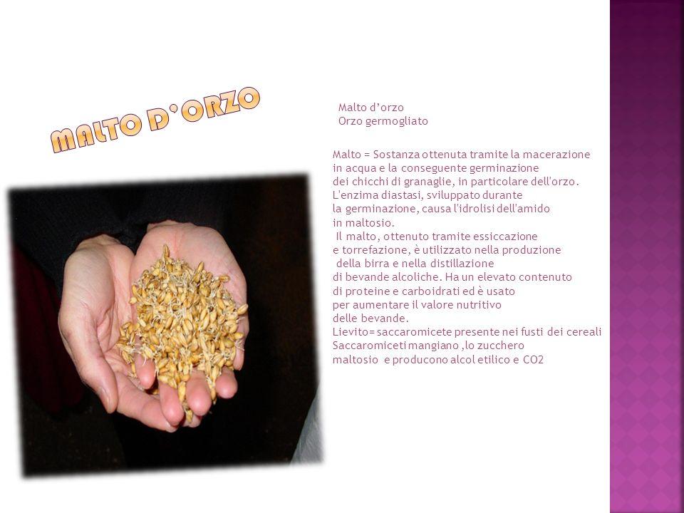 Malto dorzo Orzo germogliato Malto = Sostanza ottenuta tramite la macerazione in acqua e la conseguente germinazione dei chicchi di granaglie, in particolare dell orzo.