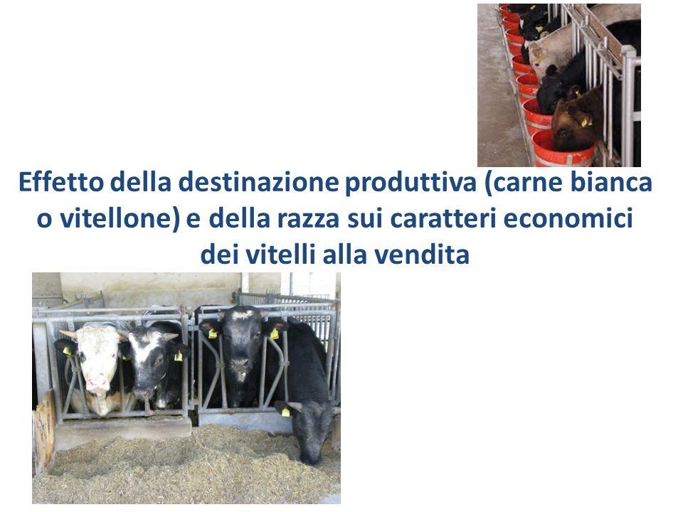 Effetto della destinazione produttiva (carne bianca o vitellone) e della razza sui caratteri economici dei vitelli alla vendita