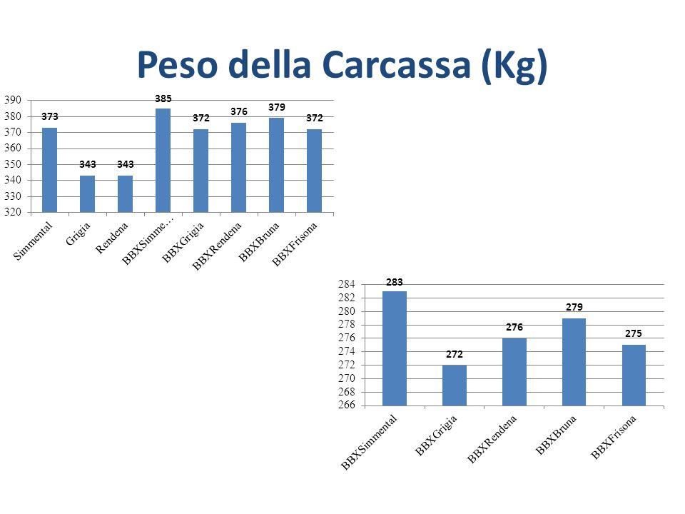 Peso della Carcassa (Kg)