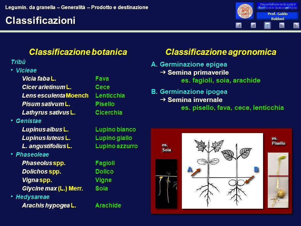 Prof. Guido Baldoni Prof. Guido BaldoniClassificazioni Classificazione agronomica A.Germinazione epigea Semina primaverile es. fagioli, soia, arachide