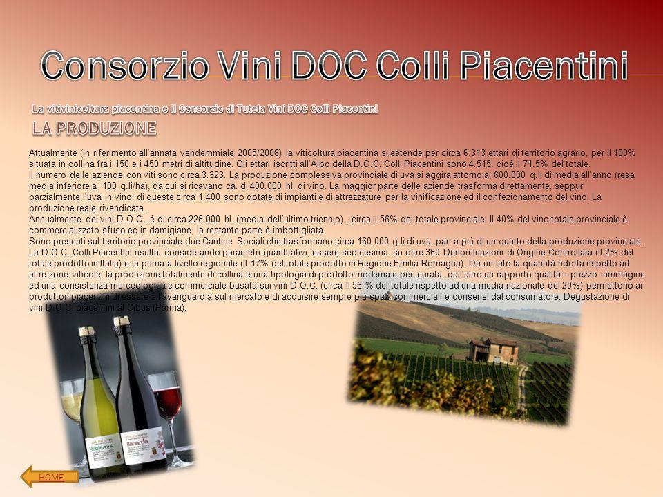 Attualmente (in riferimento all'annata vendemmiale 2005/2006) la viticoltura piacentina si estende per circa 6.313 ettari di territorio agrario, per i