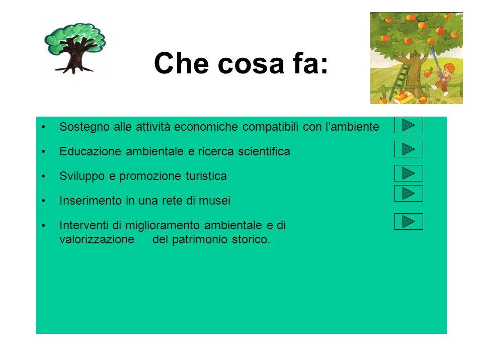 Concorso indetto dai LIONS CLUB Valle Scrivia a.s.2000/2001 Classe IIC Ist..Comprensivo di Casella sez..Montoggio Insegnanti: proff..