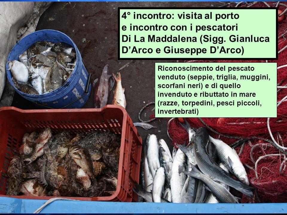4° incontro: visita al porto e incontro con i pescatori Di La Maddalena (Sigg. Gianluca DArco e Giuseppe DArco) Riconoscimento del pescato venduto (se