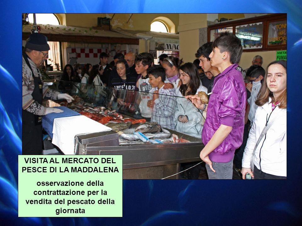 VISITA AL MERCATO DEL PESCE DI LA MADDALENA osservazione della contrattazione per la vendita del pescato della giornata
