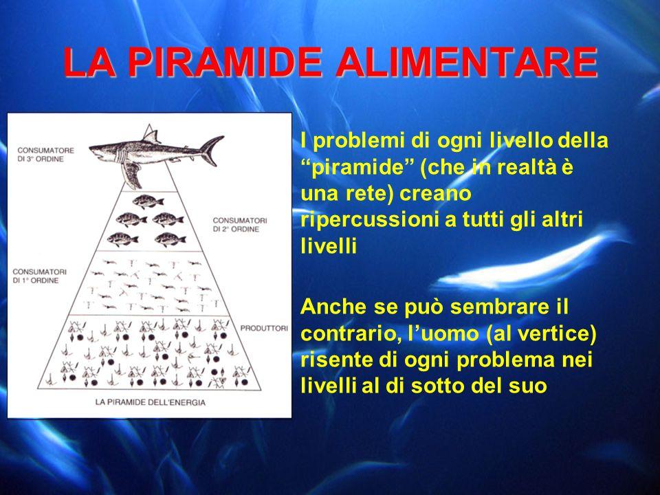 LA PIRAMIDE ALIMENTARE I problemi di ogni livello della piramide (che in realtà è una rete) creano ripercussioni a tutti gli altri livelli Anche se pu