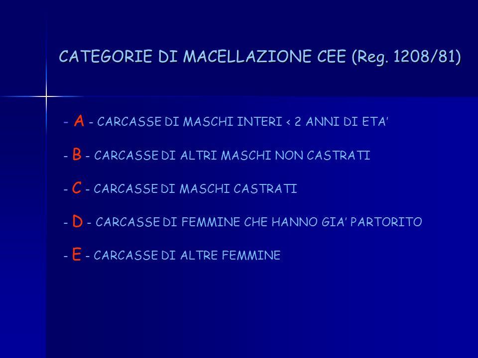-VITELLI A CARNE BIANCA5-6 mesi - VITELLONI - LEGGERI (BABY BEEF) 12-20 - PESANTI mesi - MANZI 12-16 mesi, castrati - VACCHE A FINE CARRIERA - TORI A